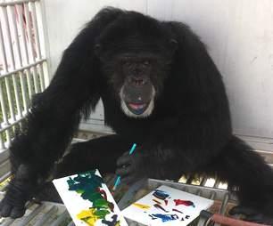 chimp rescue sanctuary