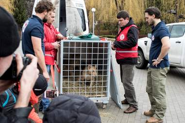 Lion cubs being saved from breeding center in Bulgaria