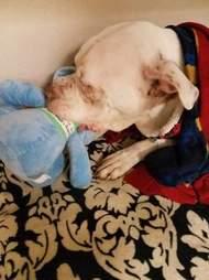 Dog with stuffed elephant toy