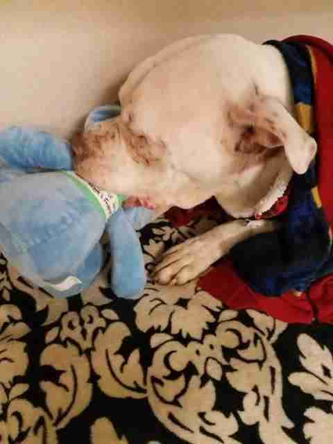 Dog with stuffed elephant toy