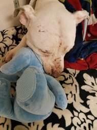 Dog with stuffed animal toy