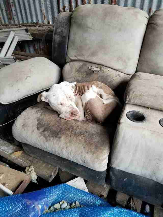 Street dog lying on old couch