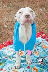 Sad looking dog wearing coat