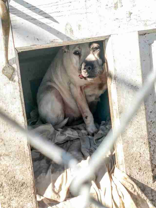 Dog who lived in dog house for 8 years