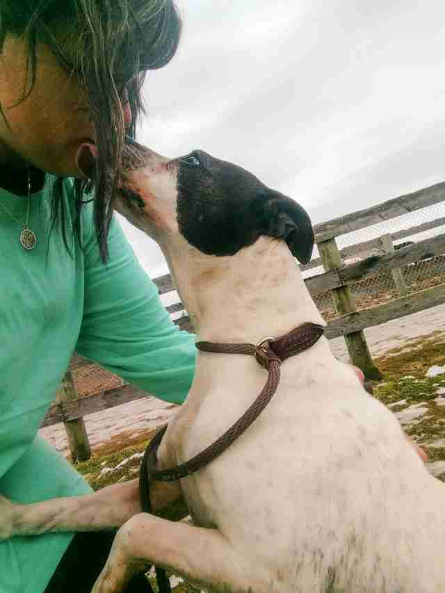 Dog kissing rescuer