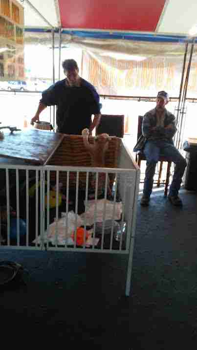 A man removing a baby cub from a crib