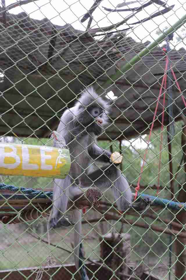 Caged monkey at zoo