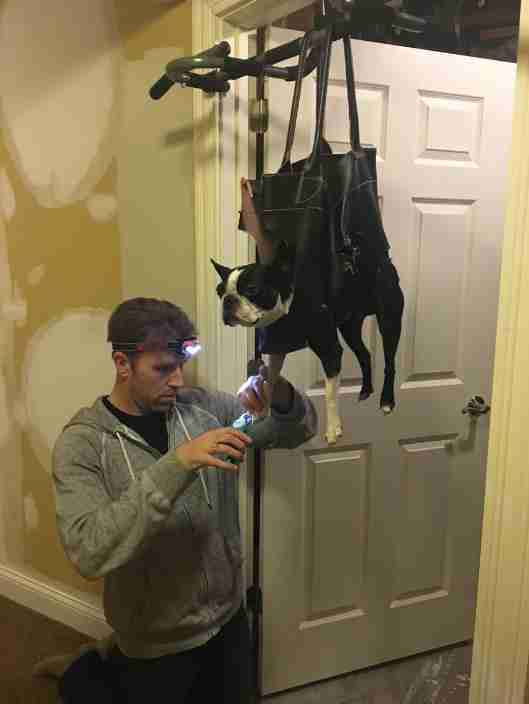 Dad Modifies Purse To Make Trimming Nails Easier On His Dog - The Dodo