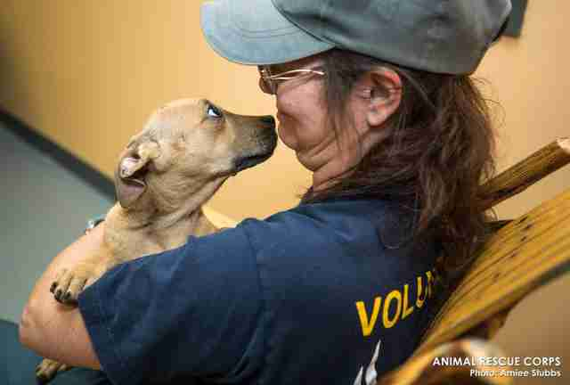 Puppy saved suspected fighting ring in woods of Humphreys County, TN