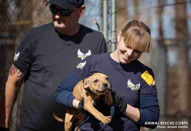 Rescuers save dogs from suspected fighting ring in woods of Humphreys County, TN