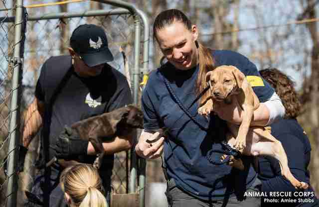 Rescuers save puppies from suspected dog fighting ring in Humphreys County, TN