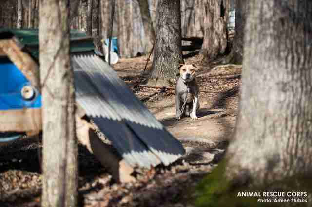Suspected dog fighting ring in woods of Humphreys County, TN