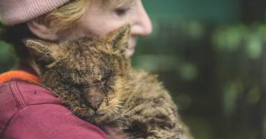 Woman comforting cat with mange at shelter