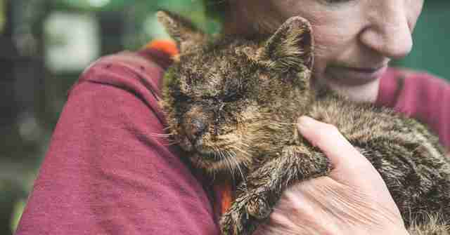 Woman cuddling shelter cat with mange