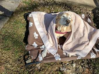 Dog in blankets enjoying sunshine