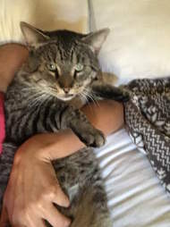 Valentino cat saved from mange finds forever home