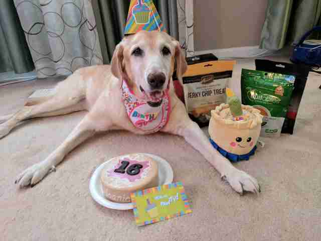 Dog celebrating 16th birthday
