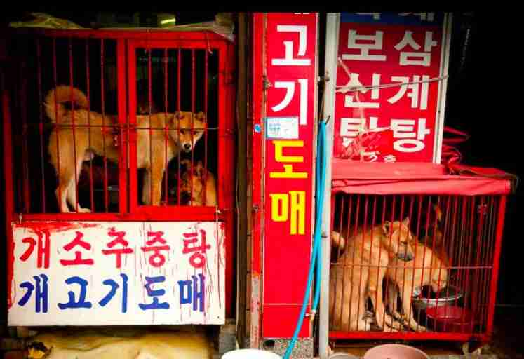 Dogs from the meat trade
