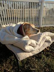 Dog snuggled up in dog bed outside