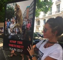 golden retriever dog meat trade china rescue