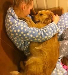golden retriever rescue china dog meat trade