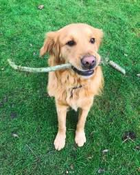 dog meat trade survivor england clover