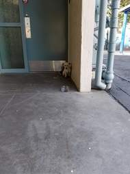 Dog cowering in the corner of a building