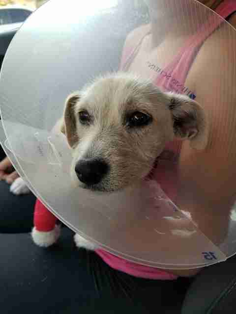 Dog with cone of shame around neck
