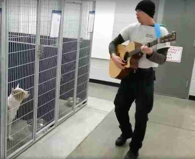 dog rescue sing north carolina