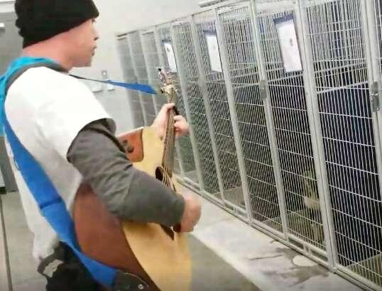 dog singing shelter north carolina