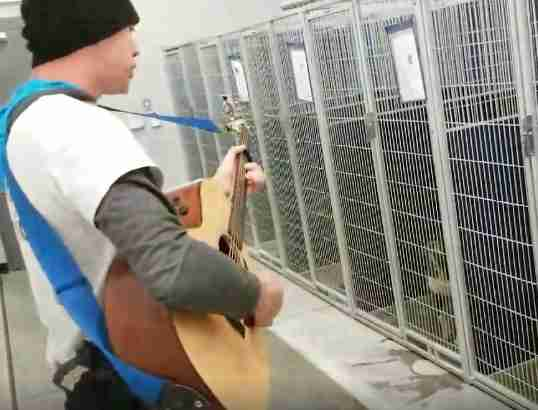 dog singing shelter north carolina