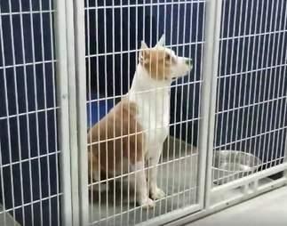 dog sing shelter north carolina