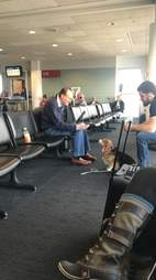 corgi comforts man in airport