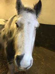 Close up shot of rescued pony