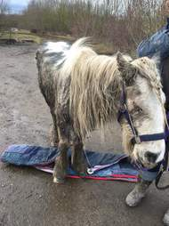 Sick and neglected horse