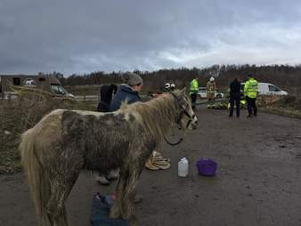 Pony standing alone with rescuer team