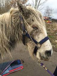 Rescued pony with eye issues