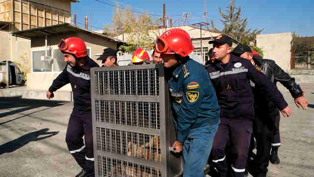 Bear being rescued from alabaster factory in Armenia
