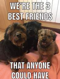 three senior dogs need a home together