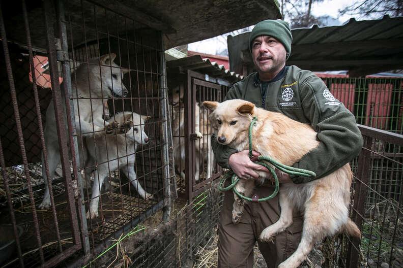 dog meat farm rescue south korea olympics