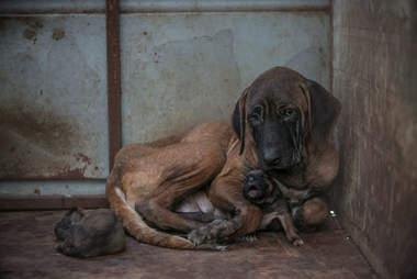 dog meat farm south korea olympics