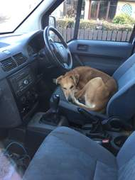 dog abandoned in someone's van