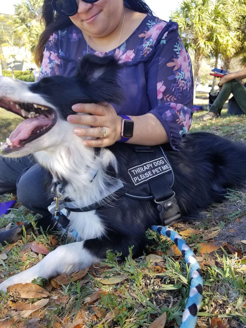Therapy dog Kermit comforting Parkland, Florida, community after high school shooting