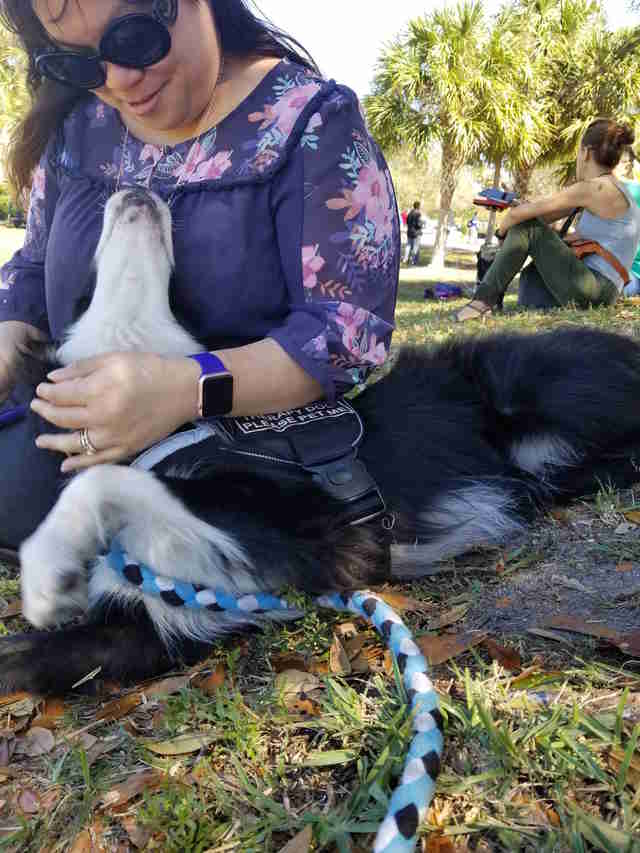 Therapy dog Kermit comforting Parkland, Florida, community after mass shooting