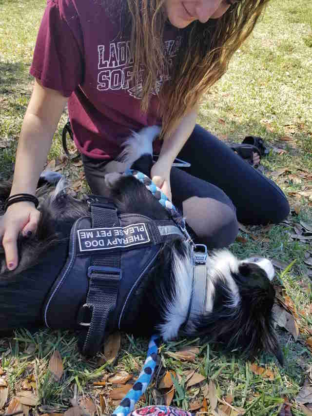 Therapy dog Kermit helping comfort survivors of Parkland, Florida, school shooting
