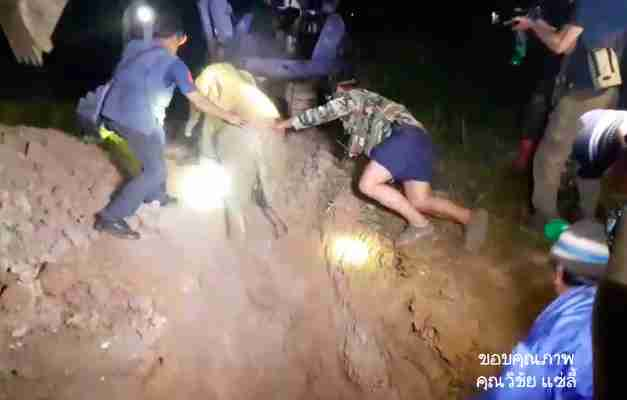 elephant calf rescue Thailand