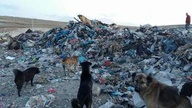 Dogs living in garbage dump