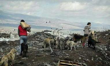 People bringing food to homeless dogs at landfill