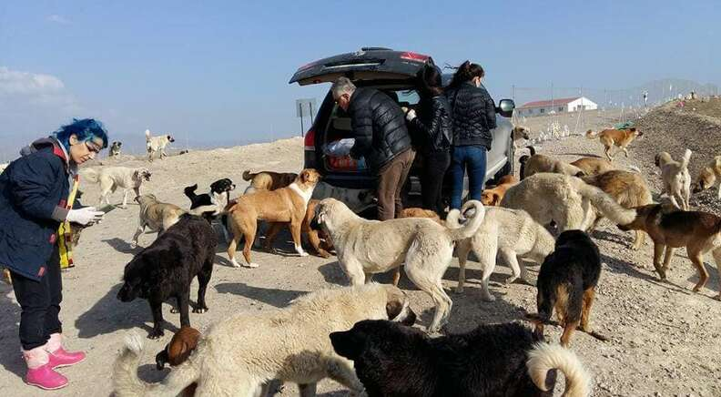 People helping stray dogs at a garbage dump