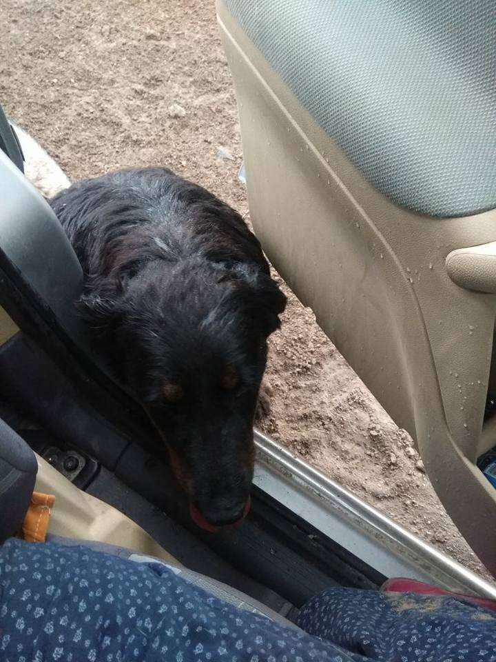 A dog trying to get into a car